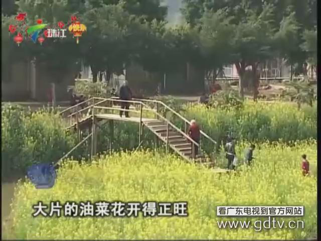 肇庆:鼎湖沙浦 春暖花开
