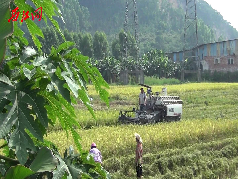 又是一年早稻丰收时