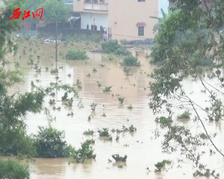 高要回龙镇一村庄突发洪水 消防作战11个小时救出54名被困人员