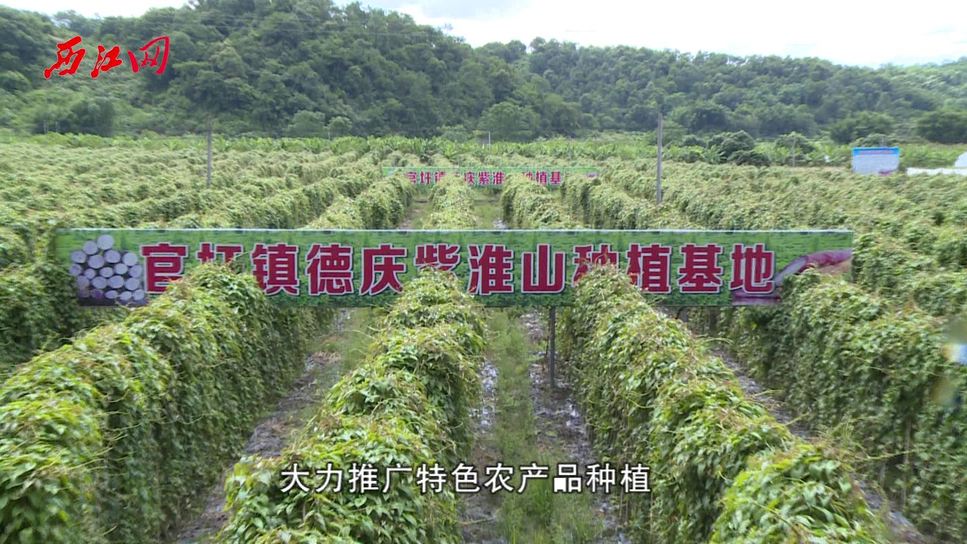 """促进农村产业融合发展 德庆种植业变出""""新花样"""""""
