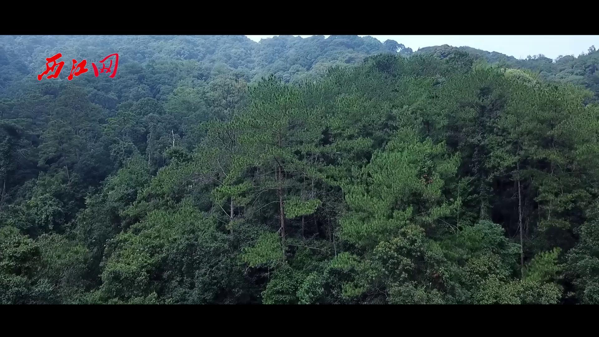 封开黑石顶自然保护区航拍