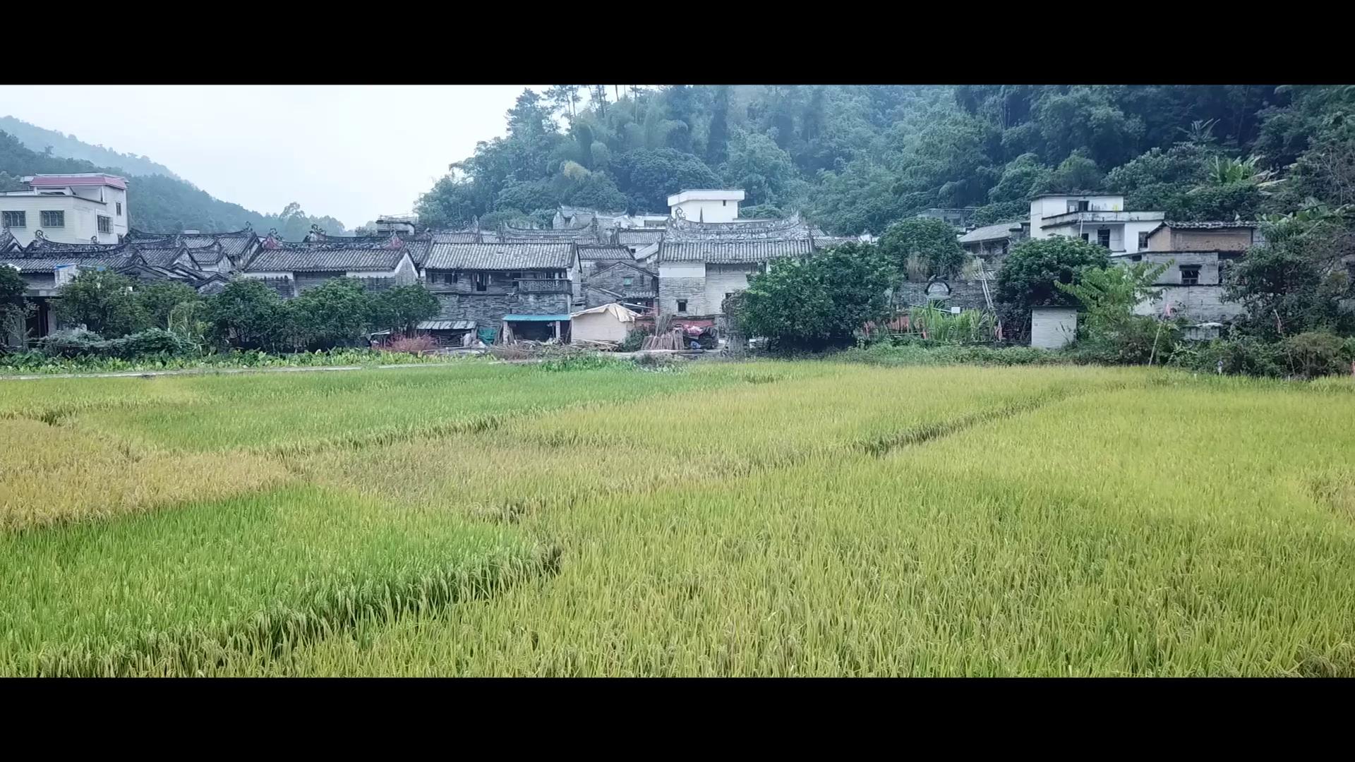 航拍杨池古村