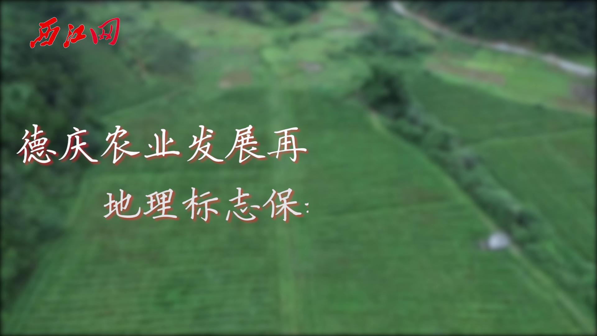 德慶農業發展再獲殊榮 地理標志保護助推南藥發展