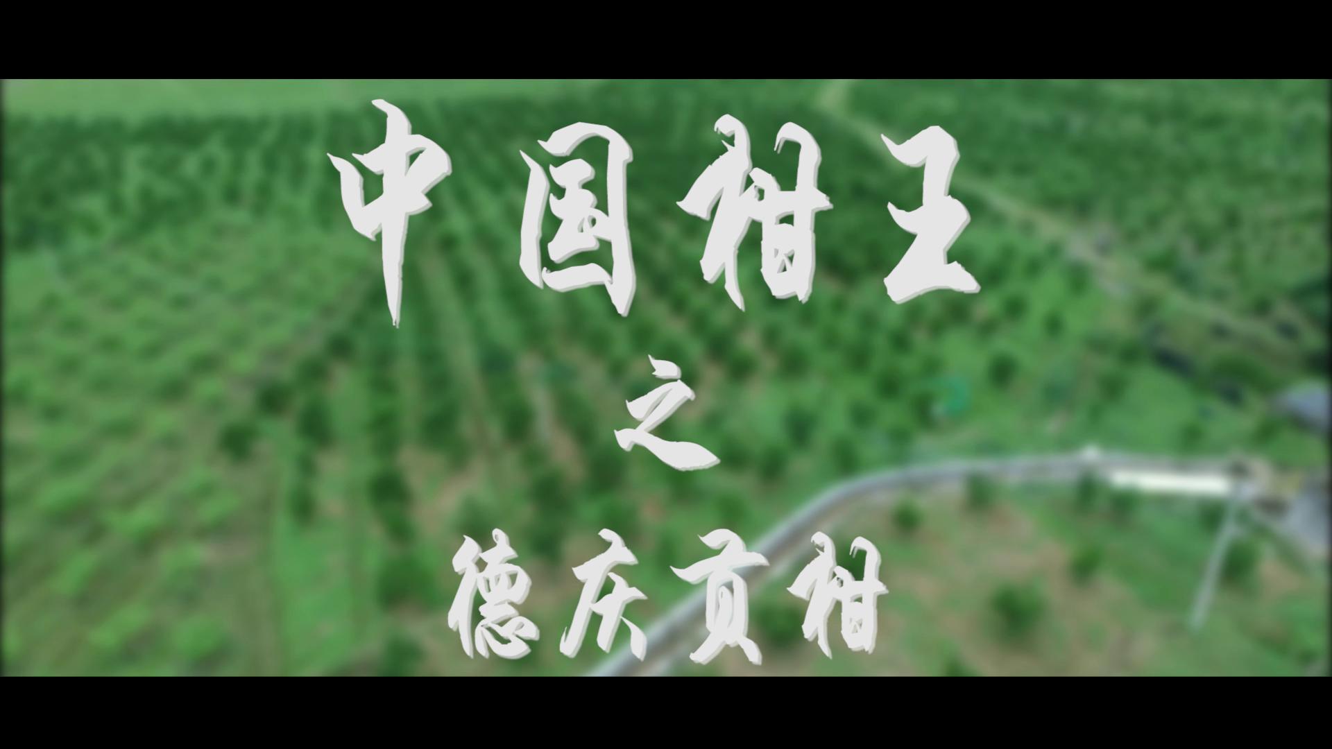 航拍視角!中國柑王-德慶貢柑