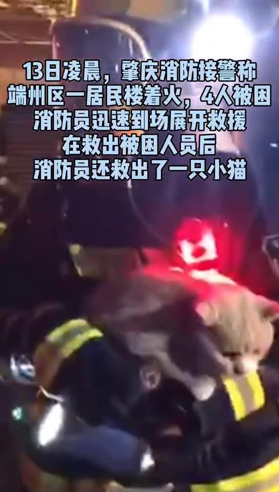 (抖音)居民楼失火,消防员救出被困四人后还救了一只猫