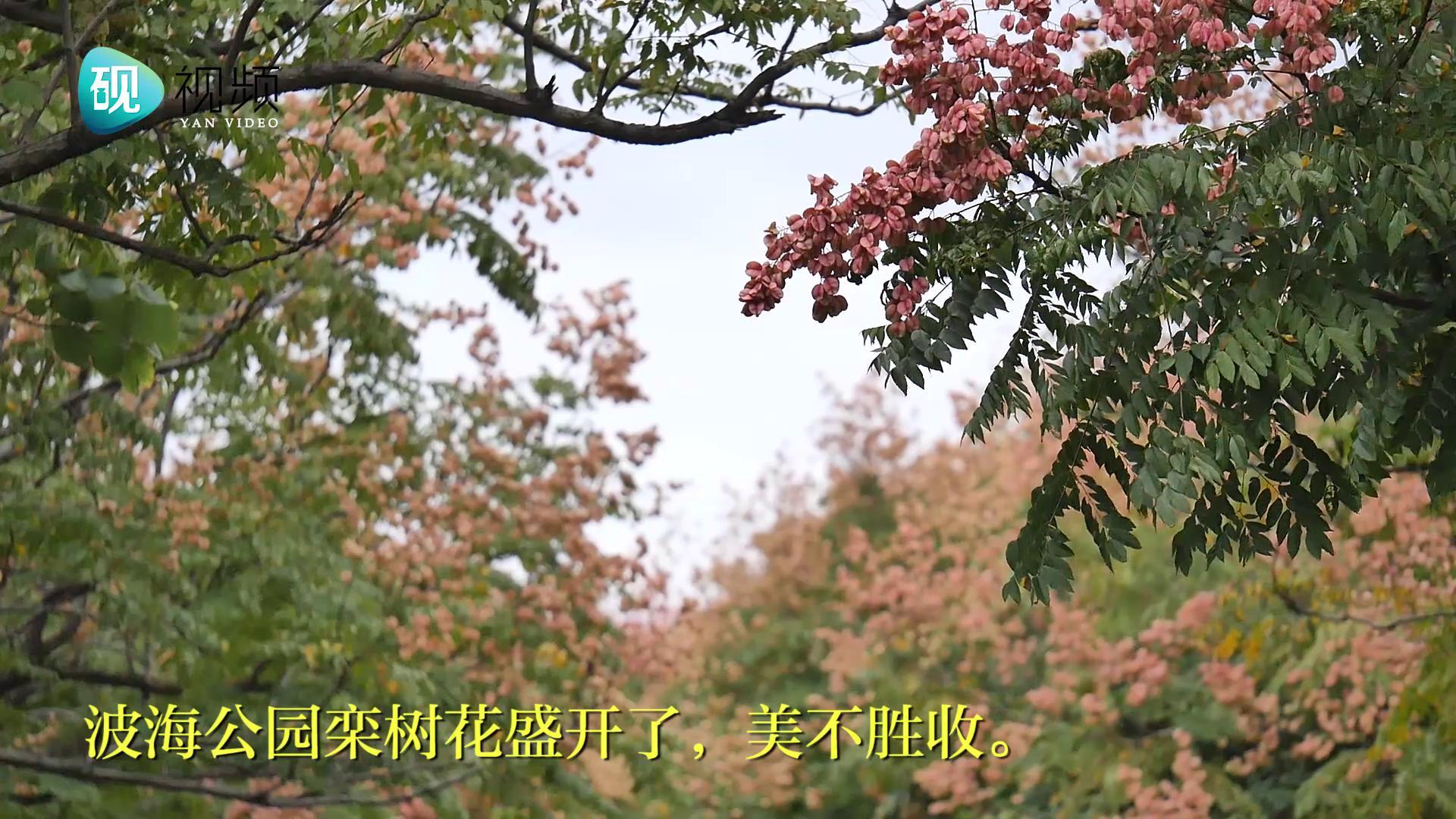 肇庆的秋日