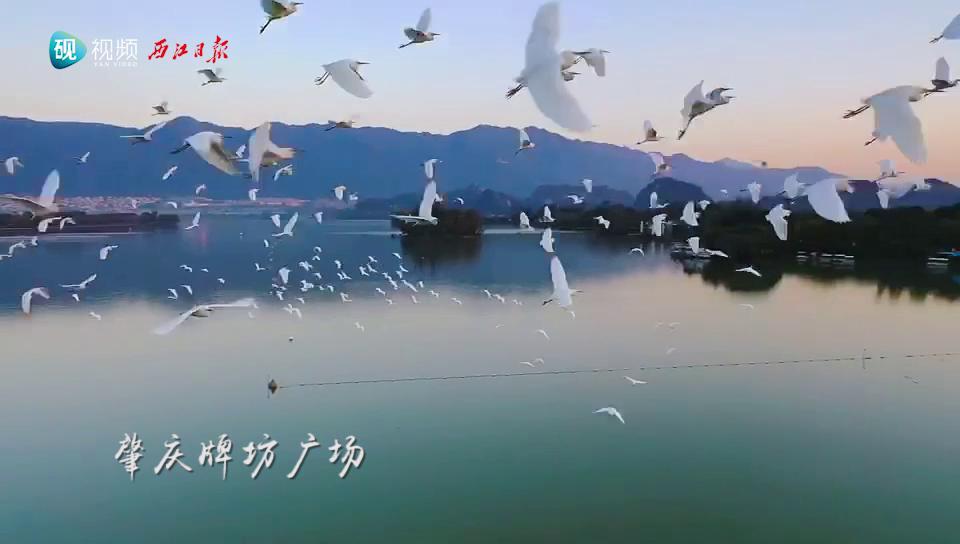 肇庆牌坊广场飞鸟