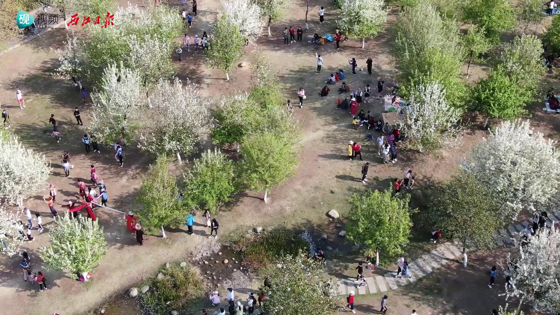 牌坊公园:春光扑面,梨花如雪!