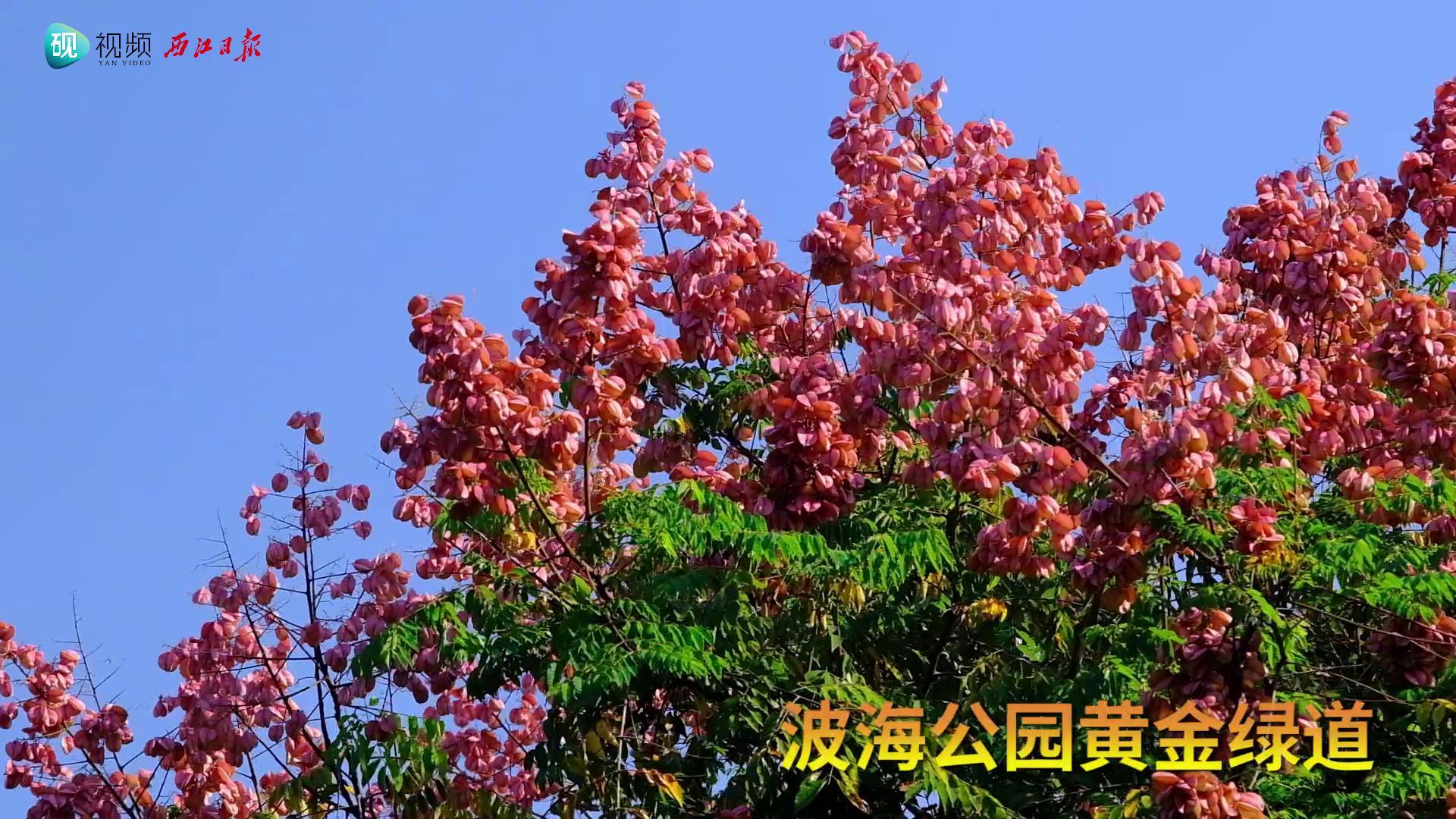 国庆假期,肇庆最美的风景