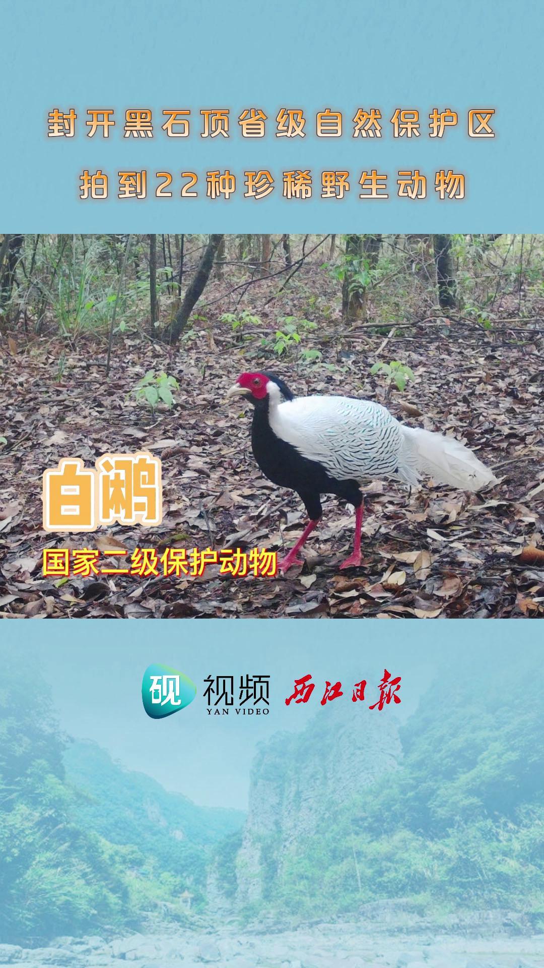 封开黑石顶省级自然保护区拍到22种珍稀野生动物
